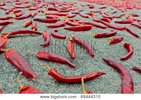 Many Chili Peppers Drying On The Ground