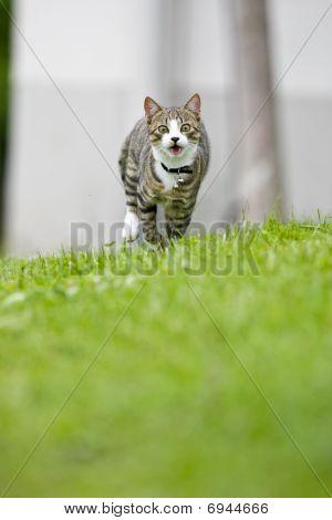 Cat Is Running