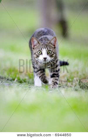 Cat Is Hunting