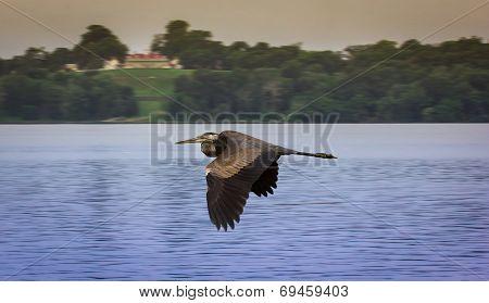 Potomac Bird