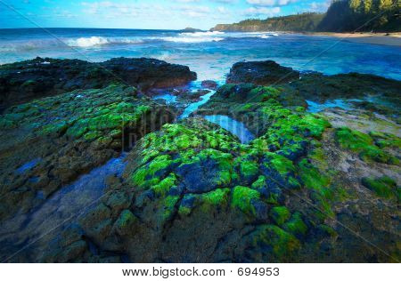 Moss, Ponds & Waves