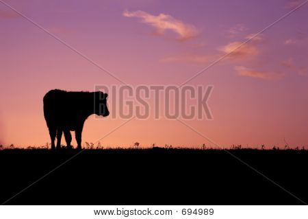 Cow silhouette in sunrise field poster