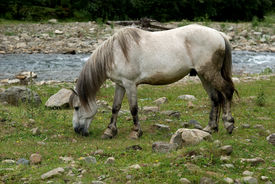 Horse Grazing On A Mountain Pasture Along The River