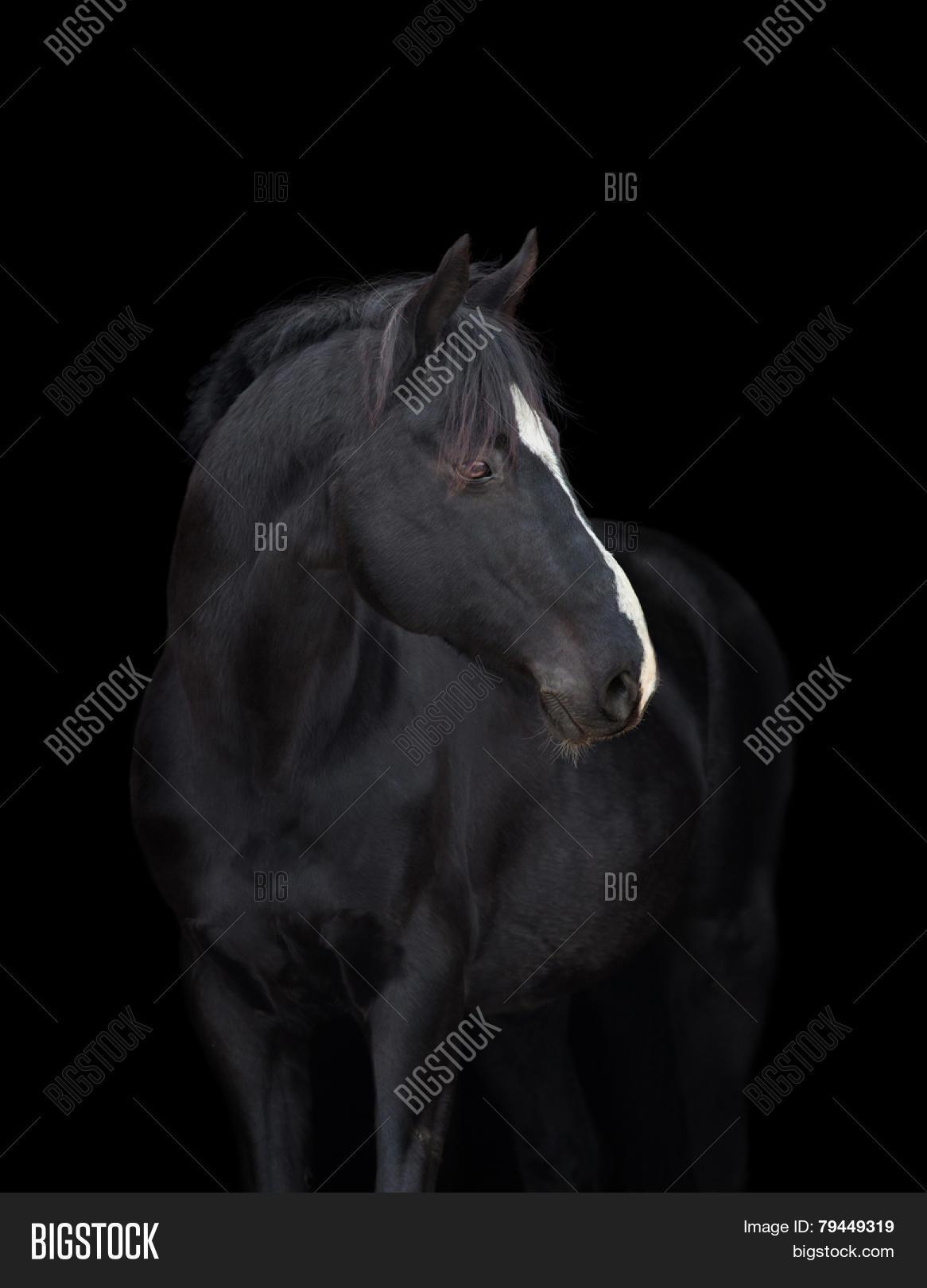 Imagen Y Foto Black Horse Head Prueba Gratis Bigstock