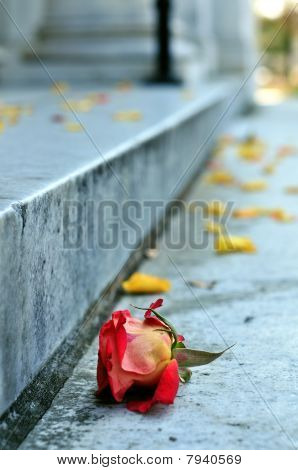 A Rose to Remember