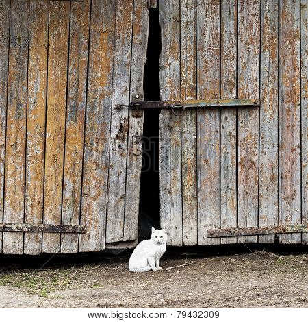 white cat sitting by a barn door