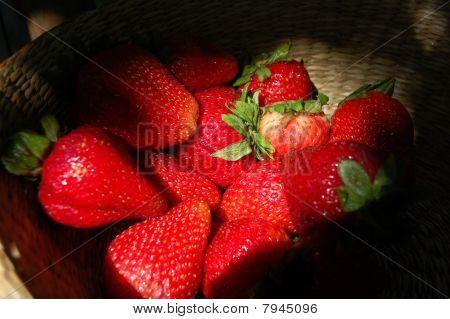 Sunlight Strawberries