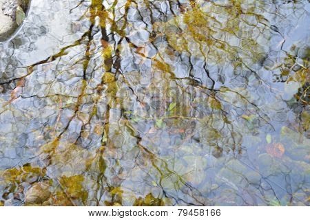 Reflection On River