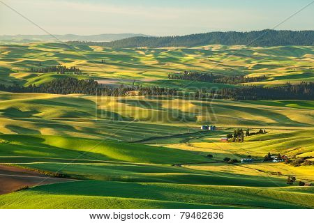 Farmer Farm In Countryside In Palouse