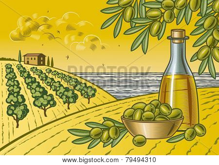 Olive harvest landscape. Fully editable vector illustration with clipping mask.