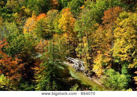 Autumn Ravine