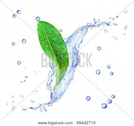 Green leaf in water splashes isolated on white