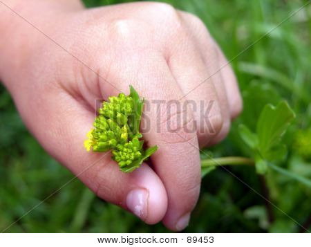 Childs Hand Picking Weed2
