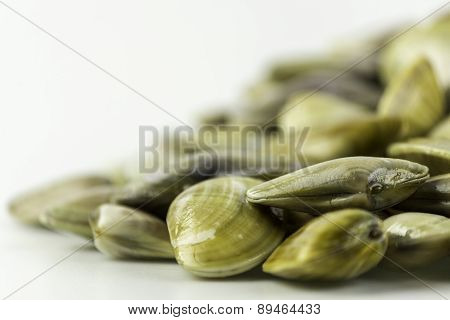 Donax Trunculus, An Edible Species Of Saltwater Clam, Is A Bivalve Species In The Family Donacidae.