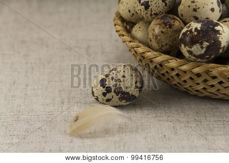 Quail Eggs In A Wicker Oval Shape