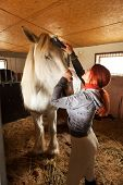Woman prepare horse for riding making braid in stable poster
