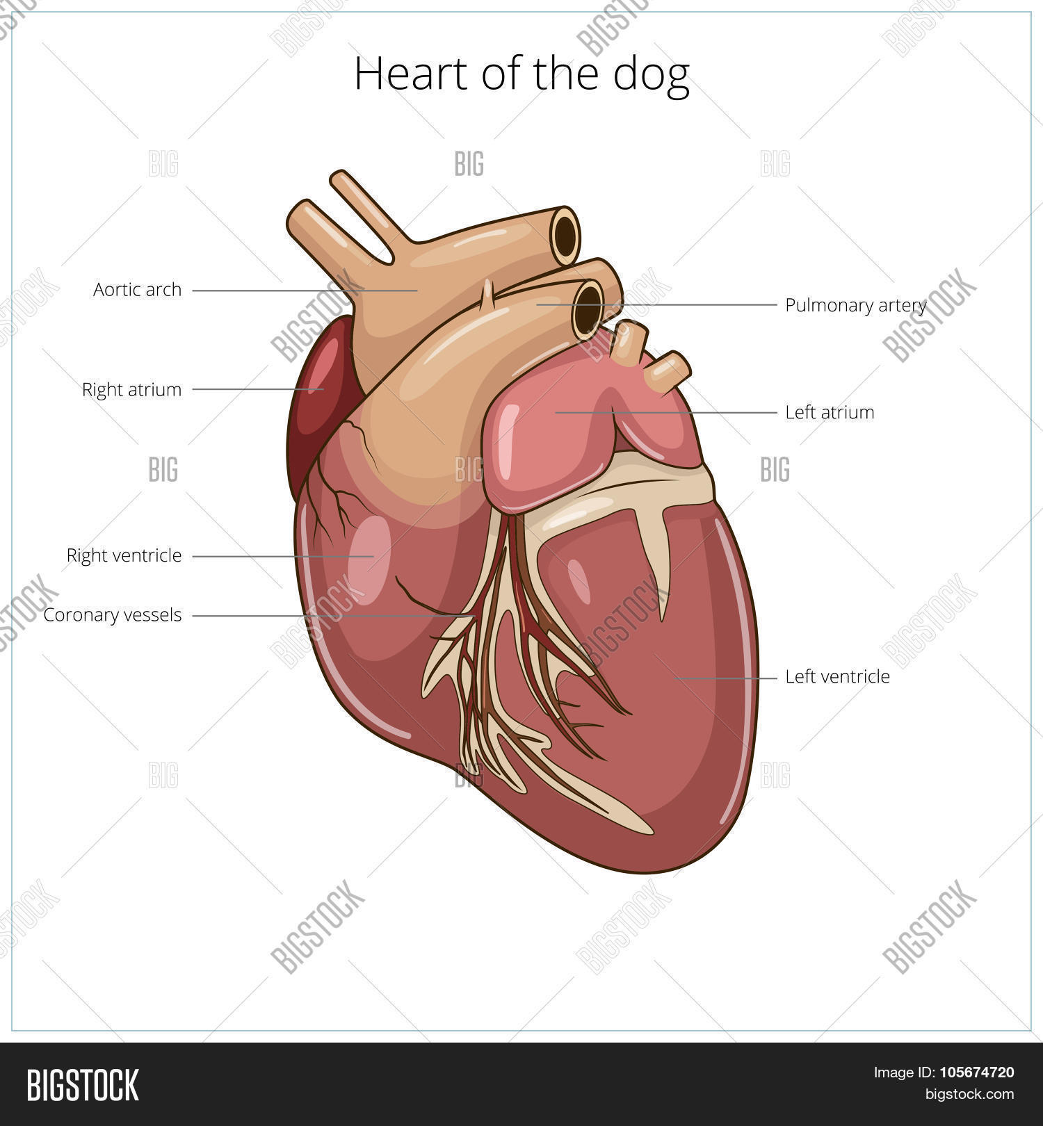 Heart Dog Vector Vector & Photo (Free Trial) | Bigstock