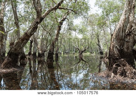 Wetland Forest