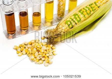 Corn Generated Ethanol In Test Tubes, With Biofuel On Maize