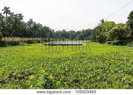Pond Of Uttara Gano Bhaban