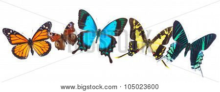 Tropical butterflies row
