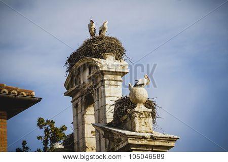storks nest, Spanish town of Alcala de Henares, palaces and ancient university