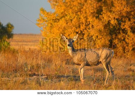 Thin Deer With Autumn Leaves At Sunset