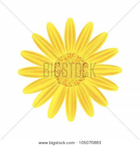Yellow Daisy Flower On A White Background