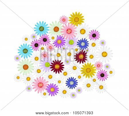 Assorted Daisy Flowers on A White Background