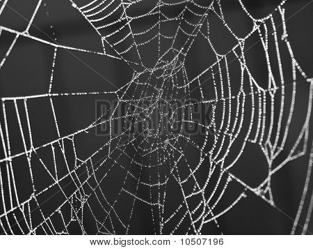 Spider Web Covered with Sparkling Dew Drops poster