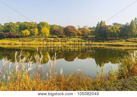Autum trees and colorful  landscape in Seoul, South Korea