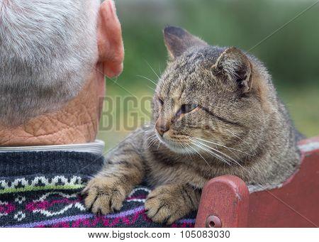 Cat On Man's Shoulder