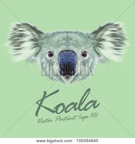 Vector Illustrative Portrait of Koala Bear.