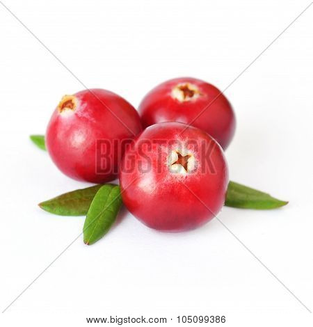 Uncultivated forest cranberries