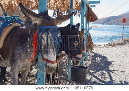 The donkey taxi for a stopover