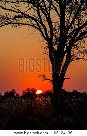 Red Africa Sunset