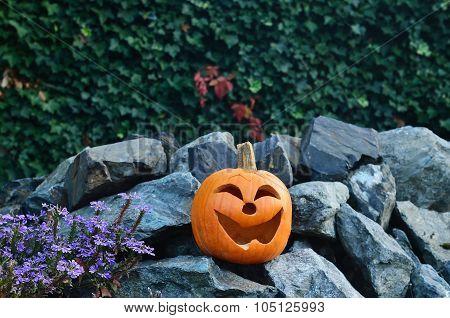 Smile on the rocks