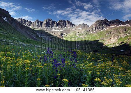 Wildflowers At American Basin In The Colorado Rockies