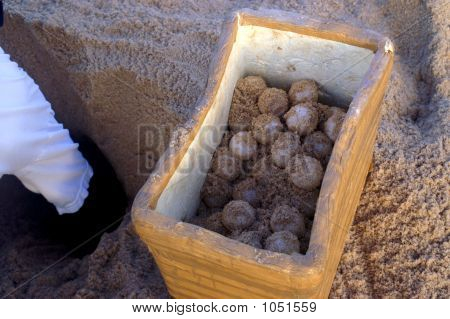 Turtle Egg Conservation