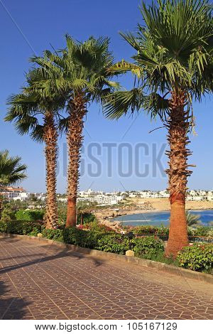 Palm Trees And Footway In Tropical Garden, Red Sea, Sharm El Sheikh, Egypt