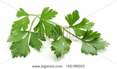 Fresh parsley isolated on white