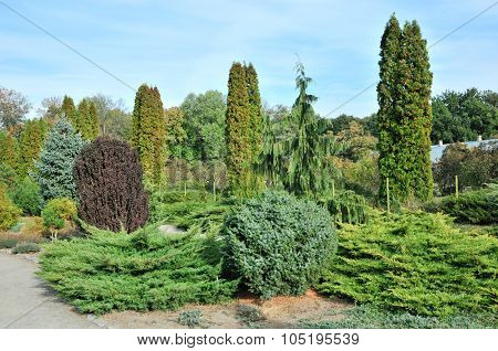 Garden of coniferous trees.
