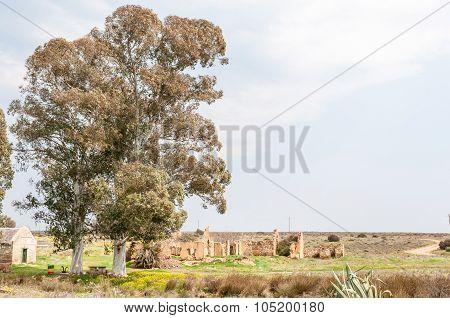 Tree And Ruins At Matjiesfontein Farm