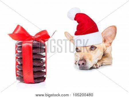 Christmas Dog As  Santa Claus