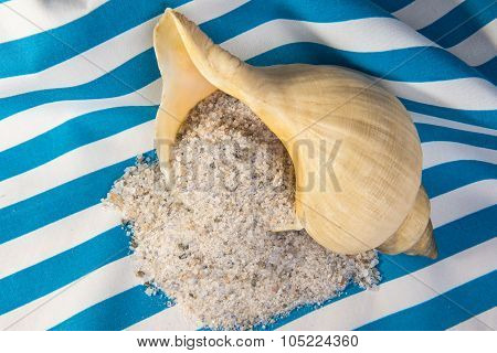 Unrefined Natural Sea Salt And Clamshell
