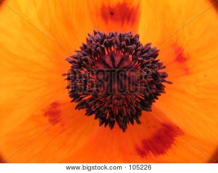 Close up shot of an orange flower poster