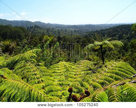 Fern in the Waitakere ranges