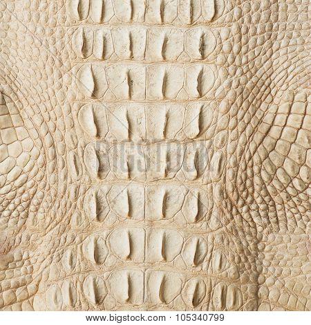 Golden crocodile skin texture