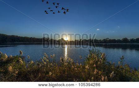 Sunset On A Chesapeake Bay Pond With Geese Flying