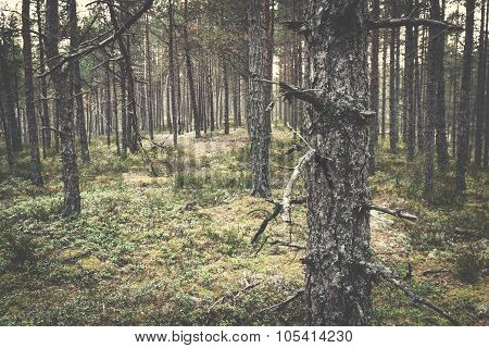 Misterious Forest